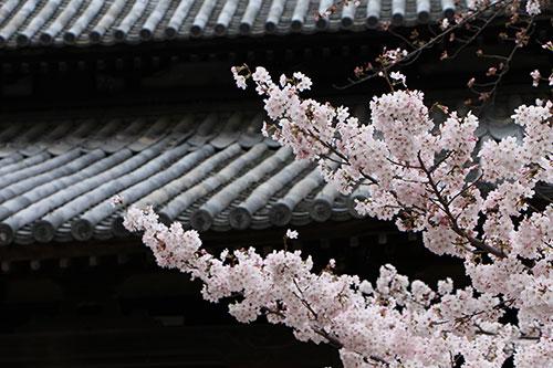 本立寺IMG_0032.jpg